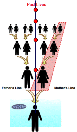 An individual may also inherit energetic patterns or cycles from the Father, Mother or both.